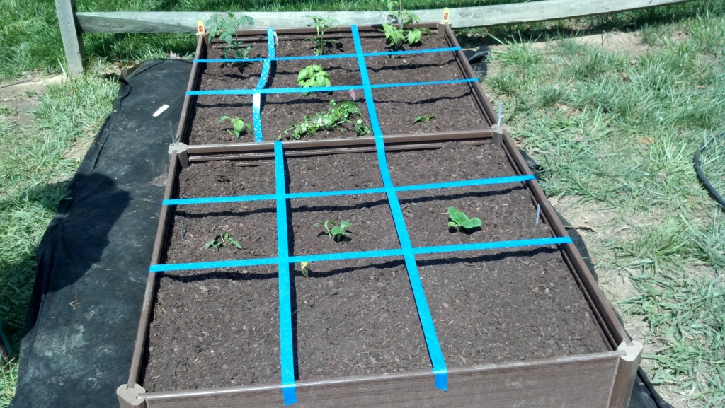 square foot garden laid out and planted